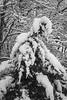 Snow Bird (Thomas Pohlig) Tags: snow landscape winter trees blackandwhite monochrome mono jersey jerseyshore home