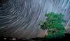 Geminids Star Trail (2017) (www.craigrogers.photography) Tags: oak tree stars milkyway night startrail geminid geminds meteor asteroid dark nightsky astro shootingstar