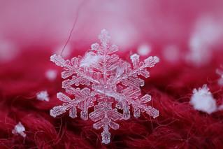 Strawberry Ice Cream - Snowflake n° 7 - Winter 2017-2018 - Switzerland