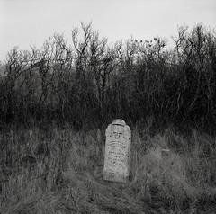 Grave, Eastern Washington (austin granger) Tags: grave headstone washington palouse death memory sarahblue amosblue 1888 time impermanence square film gf670