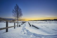 Jävre 20171222 (johan.bergenstrahle) Tags: 2017 winter vinter december finepics jävre landscape landskap natur sweden sverige hdr