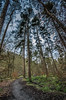 Tall Trees (Glen Parry Photography) Tags: glenparryphotography hebdenbridge calderdale crags d7000 hardcastlecrags nikon sigma walking westyorkshire woodland woods yorkshire forest wood