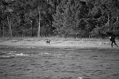 IMG_0045 (www.ilkkajukarainen.fi) Tags: espoo visit sea meri tarvel traveling december joulukuu blackandwhite mustavakoinen haukilahti suomi suomi100 eu europa scandinavia finland finlande nature luonto landscape maisema