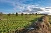 Greymare-Hill-B-03-December-2017 (Steve Ellwood Whitley Bay) Tags: greymarehill shotley northumberland treeplantation 125trees dioceseofnewcastle standrew church ellwood steveellwood
