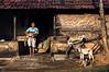 Happiness (sudarsanganesh) Tags: ponpadhirkoodam saturday morning street village nikon d3200 cwc chennai hut goat