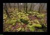Lapiaz du Bois de la Pérouse - Refranche (francky25) Tags: lapiaz du bois de la pérouse refranche karst franchecomté doubs