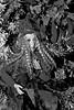 between_treseisetsei (nograz) Tags: bardingardencenter lancenigo nograz d7200 biancoenero blackandwhite strega witch