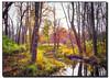 autumn stream (jsleighton) Tags: stream fall autumn tree bushes sky landscape