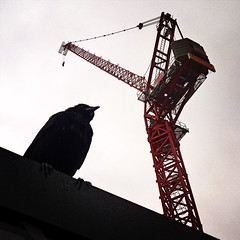 Crow and crane (Daniel James Greenwood) Tags: nokialumia mobilephonephotos danielgreenwood danielgreenwoodphotography