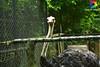 Avestruz - Ostrich (Jéssica Tebar) Tags: ostrich avestruz zoo zoológico sãopaulo safari animal vidaselvagem selvagem passeio tour paisagem landscape verde green ao ar livre