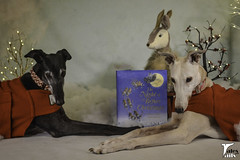 There Ought To Be Greyhounds (houndstooth4) Tags: dog greyhound flattery bunny 5152 52weeksfordogs