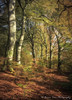 Memories Of Autumn (.Brian Kerr Photography.) Tags: scotland autumn moffat woodland forest colours photography outdoor outdoorphotography opoty nature naturallandscape natural briankerrphotography briankerrphoto formatthitech sony landscapephotography scottishlandscapes scotspirit visitscotland a7rii autumnal dumfriesandgalloway wood tree