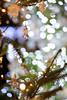20171211 Denpark 1 (BONGURI) Tags: 安城市 愛知県 日本 jp angel 天使 エンジェル crystal brilliant クリスタル light illumination bokeh 明かり 照明 イルミネーション イルミ ライト ボケ christmas event クリスマス イベント park denpark 公園 テーマパーク デンパーク anjo 安城 aichi 愛知 nikon d3s afsnikkor85mmf18g