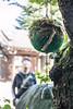 Enjuji in Yanaka, Tokyo - Japan (Marconerix) Tags: enjuji pianta tokyo tempio buddhismo tempiobuddhista ueno yanaka giappone japan spiritualità campana stronglegs