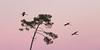 Vol du soir (VGC) Tags: f28 70200 canon 7d couchant gruescendrées lagune grues commoncrane sunset