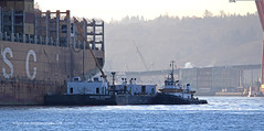 6569_Olympic Scout_Nathan Schmidt_bunkering (lg evans Maritime Images) Tags: maritimeimages ©lgevans lgevans lge portofseattle elliottbay seattlewa 2018 water boat olympictugandbarge olympicscout nathanschmidt tugs tugboat barges barge wtb beringtitan