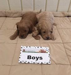 Kasey Boys pic 2 1-6