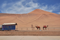 desert around Turpan (bruno vanbesien) Tags: china tulufan turpan xinjiang zhōngguó camel desert mountain 中国 cn
