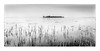 Out Yonder (RonnieLMills) Tags: rough island islandhill high tide grasses misty mono bw blackandwhite noiretblanc blancoynegro newtownards comber county down northern ireland