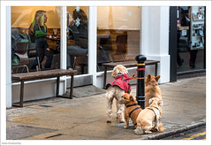 Where's Our Elevenses, Then? 363/365 (John Penberthy ARPS) Tags: 29dec17 365the2017edition 3652017 d750 day363365 johnpenberthy kingstonuponthames nikon coffee dogs shop street