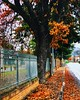 Winter (efpiem72) Tags: rainy cloudy winter tree assisi umbria