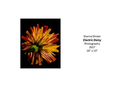 "Electric Daisy • <a style=""font-size:0.8em;"" href=""https://www.flickr.com/photos/124378531@N04/38765609474/"" target=""_blank"">View on Flickr</a>"