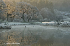 Solace In The Silence (Andy Lea Photography) Tags: landscape reflections trees water light frost mist cumbria andy lea photography