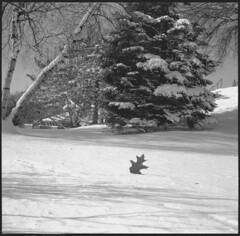 img079 (Sergei Prischep) Tags: voigtländersuperb1934 f35 skopar fuji neopan acros100 d76 6x6 120 film