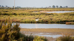 Flamingo's (aaamsss) Tags: flamingo flamingos wild nature naturelover naturephoto naturephotography bird animals landscape colors colorsnature