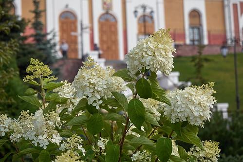 Flower 225 ©  Alexxx Malev