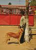 boy and his dog (meeeeeeeeeel) Tags: kidandhispet pet african africa nikon sol sunny outdoors cachorro criança menino miúdo garoto dog boy kid moçambique mozambique moz maputo candid