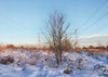 Friends - Gentleshaw (cattan2011) Tags: 英国 cables sunset 🌅 gentleshawcommon gentleshaw burntwood traveltuesday travelphotography travelbloggers travel naturelovers natureperfection naturephotography nature landscapephotography landscape