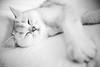 in the mood for holiday (mouzhik) Tags: мужик moujik mouzhik muzhik zemzem mujik chat katze kater cat feline gato felino gatto кот кoшка kot noiretblanc nb schwarzweis monochrom blackandwhite bw monochrome blancoynegro blanconegro biancoenero bianconero grandangle weitwinkel wideangle 22mm canonefm22mmf2stm prime pancake m6 eosm6 canon wideopen 1250sf20iso200 f2 efm22mmf2stm