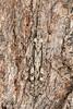 Grasshopper (jgruber111) Tags: acrididae orthoptera grasshopper insect macro entomology