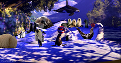 Neverland Zoo (♥ Second Life) Tags: neverland zoo michael jackson ranch michaeljackson follet snow winter water orca penguins walrus play second life destinations