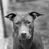 Swirls17Dec201713-Edit.jpg (fredstrobel) Tags: dogs pawsatanta phototype atlanta blackandwhite usa animals ga pets places pawsdogs decatur georgia unitedstates us