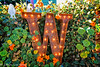 Christmas Display Cambria (lorinleecary) Tags: california cambria flowers fence green letter lights orange rust window word