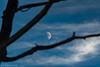 1 Plane 1 Moon 1 Tree (DJNanartist) Tags: nikond750 nikon28300mm lakedistrict anartist bassenthwaitelake moon catbells blencathra
