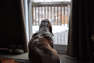 watching the snow melt