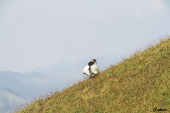 Lonely work - Wugongshan (cattan2011) Tags: worker wugongshan china jiangxi mountainside mountains mountainscape traveltuesday travelphotography travelbloggers travel naturelovers natureperfection naturephotography nature landscapephotography landscape 武功山 中国 江西