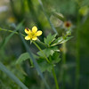 Летнее (akk_rus) Tags: 200500mmf56gvr nikkor 200500mm nikon d800 nikond800 macedonia македония nature природа flower flowers цветок цветы