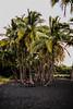 Picnic Table (wyojones) Tags: hawaii bigisland punaluu punaluubeachcountypark blacksandbeach sunset palmtree blacksand picnictable palmgrove