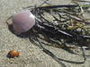 Coquillage (tititheverybest) Tags: plage coquillage coccinelle