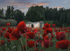 La casita del campo (rosanaparrillaleal) Tags: amapolas flores casita desenfoque