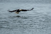 Fishing Eagle (Warp Factor) Tags: alaska canont4i summer2017 tamron150600mm cruise cruiseship ship vacation tour eagles fishing sundaylights