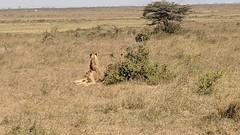2017-12-28 14.49.42 (dcwpugh) Tags: travel nairobi kenya safari nairobinationalpark