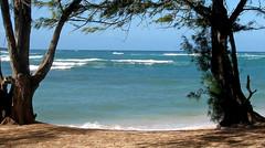 - check out the waves - (Jac Hardyy) Tags: check out waves wave ocean pacific oahu hawaii beach view blue horizon casuarina spec tree trees sheoak welle wellen meer ozean pazifik pazifischer strand blau horizont kasuarine kasuarinen