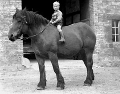 He'll grow into it (theirhistory) Tags: boys children kids horse rider diding jumper shorts wellies farm boots