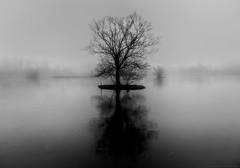 Foggy Evening (robert.lindholm87) Tags: sony rx100 rx100m3 rx100miii bw bnw black white blackandwhite blackwhite blacknwhite sweden nature tree silouette lightroom raw ishootraw ice water