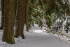 Virgin winter pathway Jungfräulicher Winter Wanderweg (ralfkai41) Tags: bäume woodlands landscape landschaft woods nature schnee winter outdoor forest wald natur snow